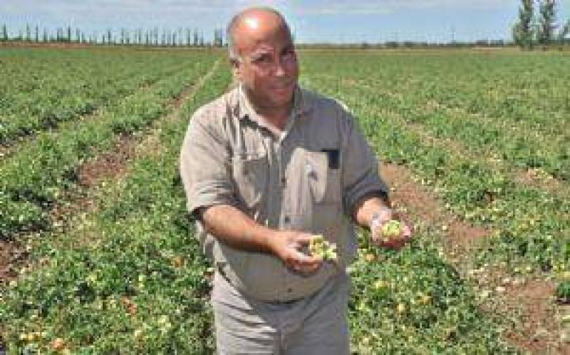 Cultivos del Este, Alvear y Lavalle, dañados por el granizo
