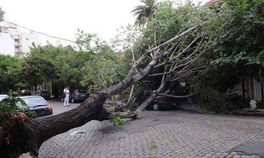 Cayeron más de 20 árboles por la tormenta de ayer en Buenos Aires