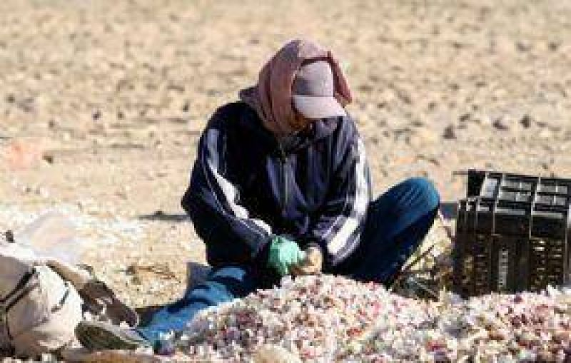El �rea cultivada con ajo se redujo 31% y la producci�n cay� 42%