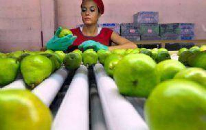 Cae la cosecha de frutas aunque hay m�s hect�reas cultivadas
