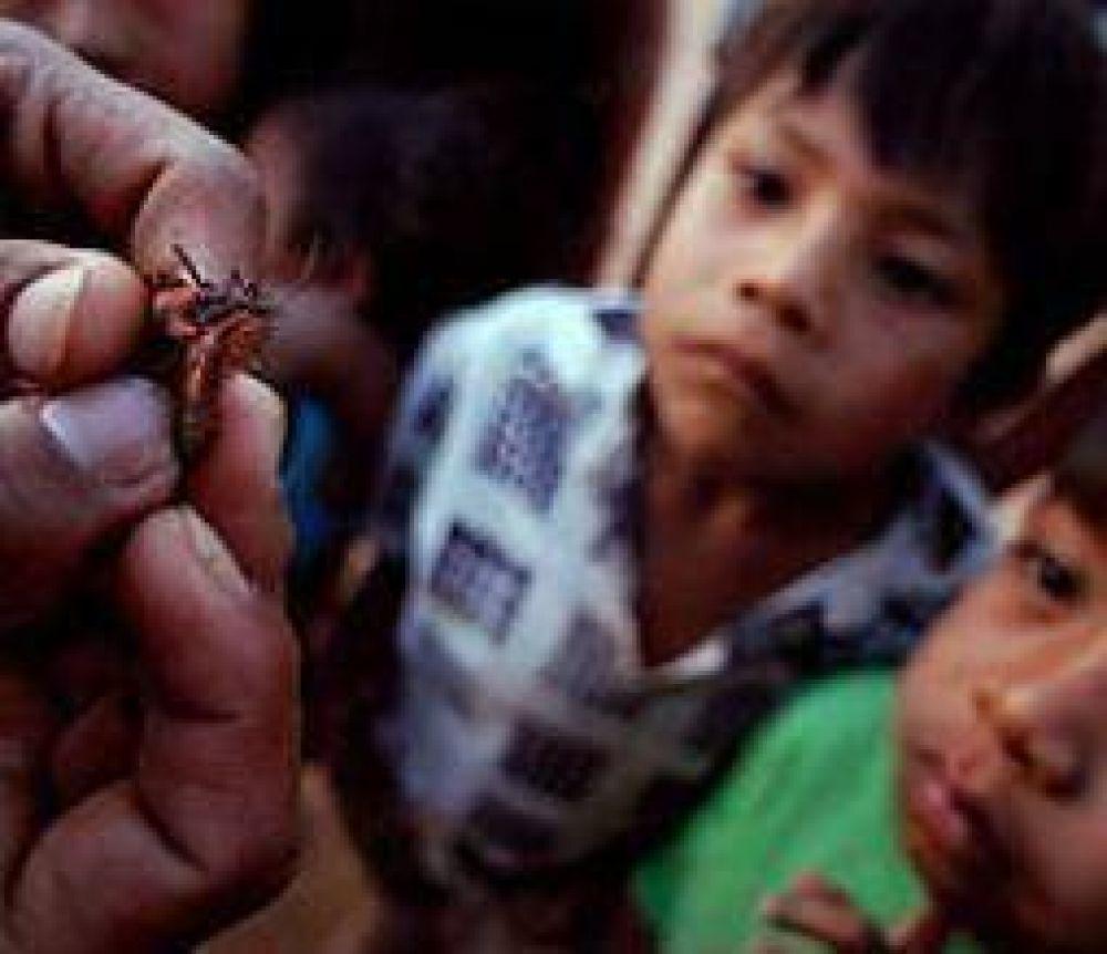 Alarmante. Detectan vinchucas en el 95% de las viviendas rurales de Chamical
