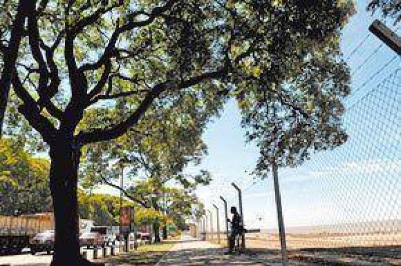 Trasplantar�n los �rboles de la Costanera para correr la avenida