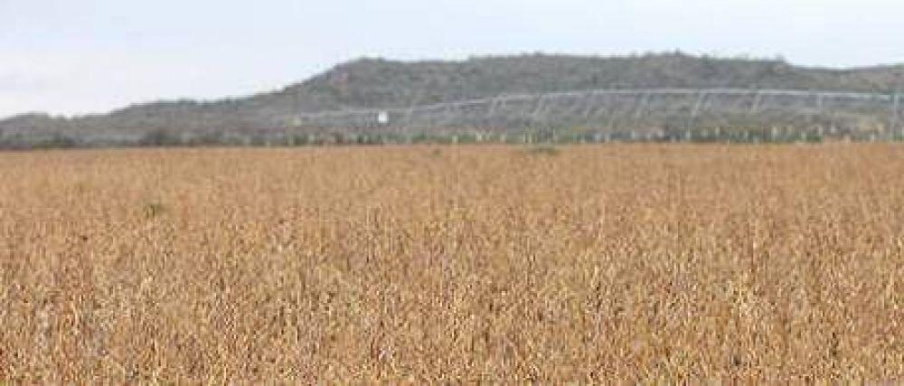 La sequía produce estragos en el interior, y en La Pampa ya se hacen cargo de los subsidios al agro