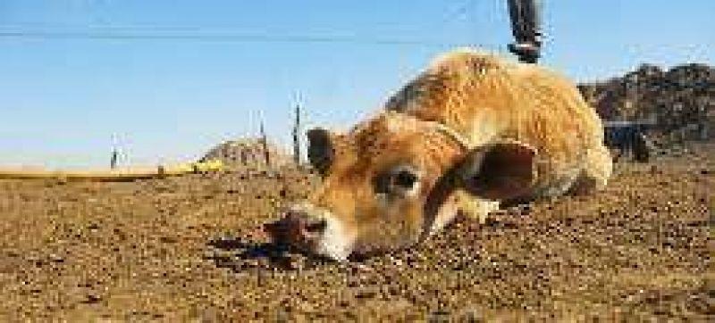 La ganadería de Santa Fe perdió u$s 63 millones por la sequía