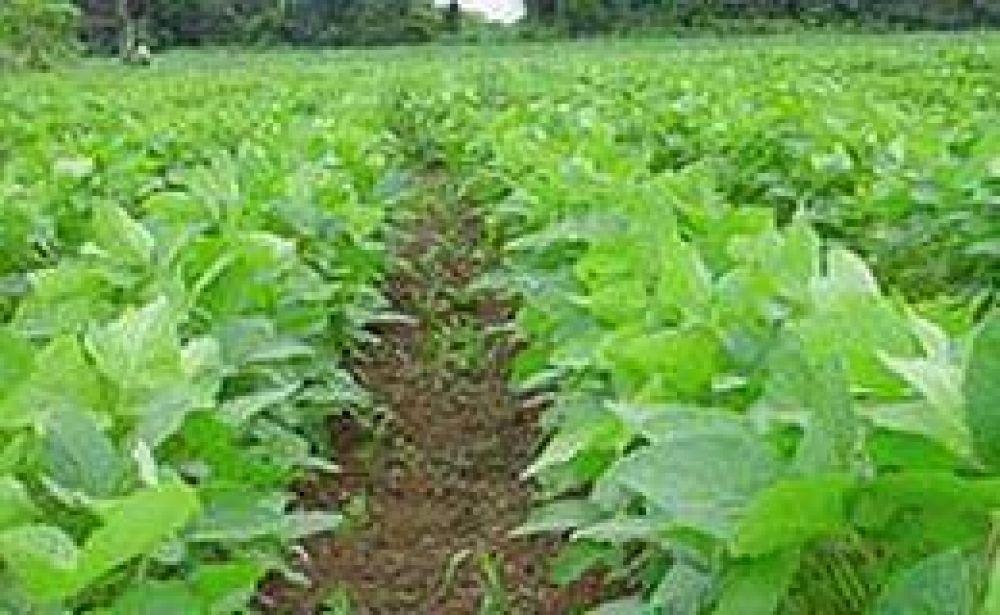 La soja recuperó 1,6%