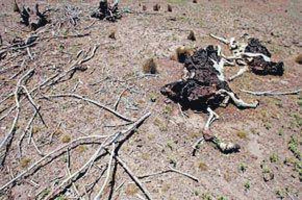 El Gobierno lanza un programa para hacer frente a la sequía