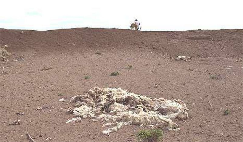 Chaco también entró en estado de emergencia rural