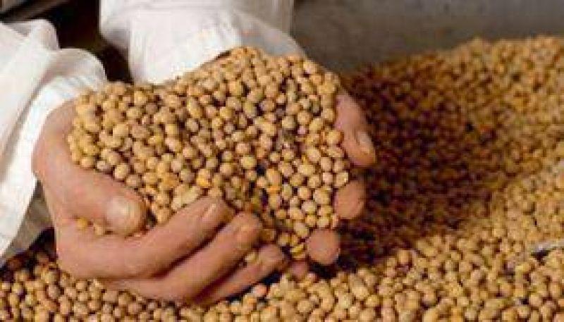 Alertan desde la Nación por el uso de glifosato en los campos de soja