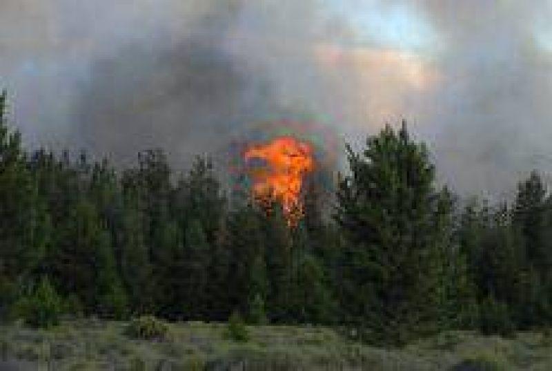 Contin�a el incendio forestal en El Bols�n