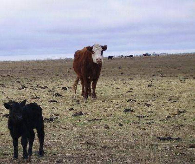 Solicitan la declaración de emergencia agropecuaria