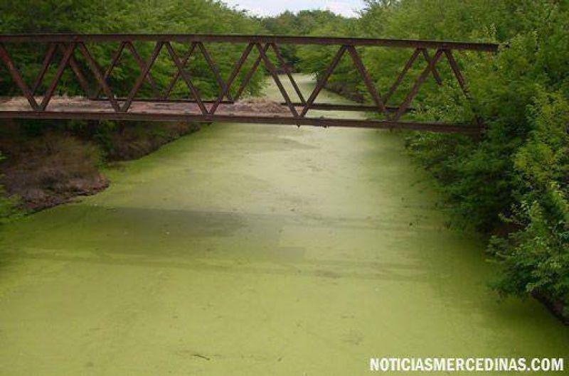 """Preocupación por """"marea verde"""" en el Río Luján"""