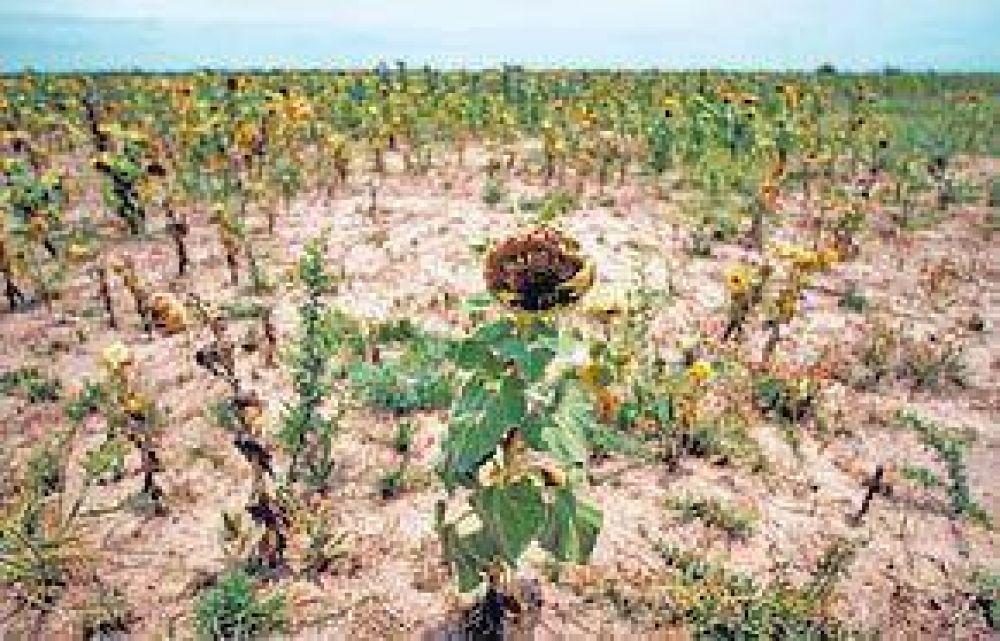 Sequía: presión del campo para que el Gobierno decrete la emergencia