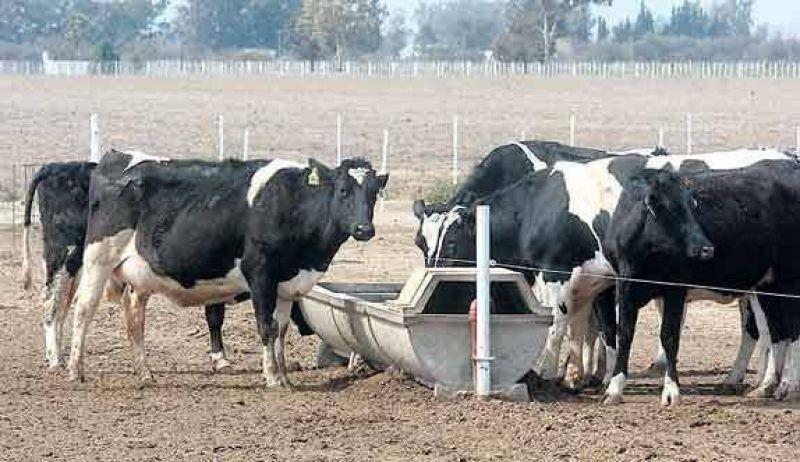 Sequ�a: cae hasta 15% la producci�n lechera