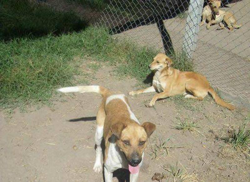 Grupo �Buena Pata� anuncia oferta de adopci�n de animales del refugio canino municipal
