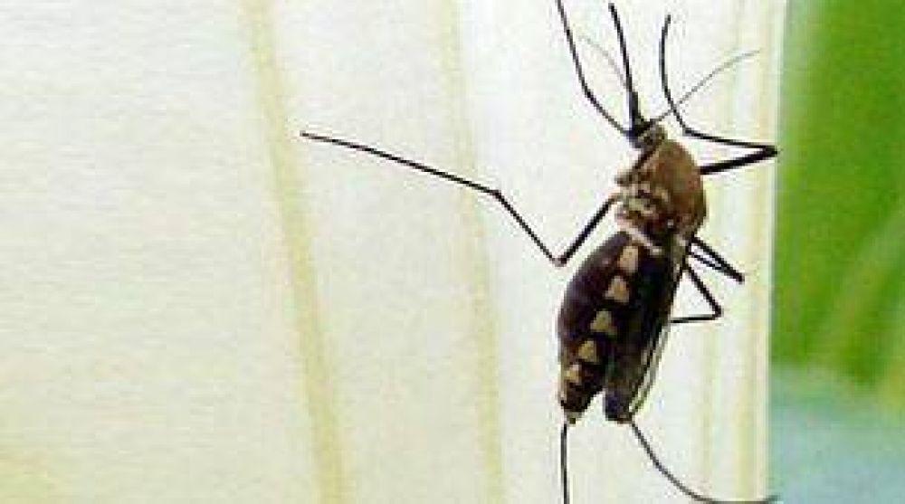 Bolivia: la peor epidemia de dengue en 10 años