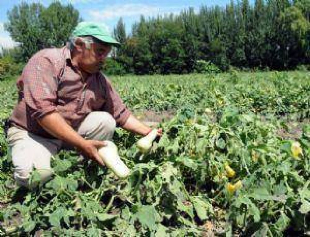 Las tormentas graniceras ya arrasaron unas 30.550 hectáreas en Mendoza