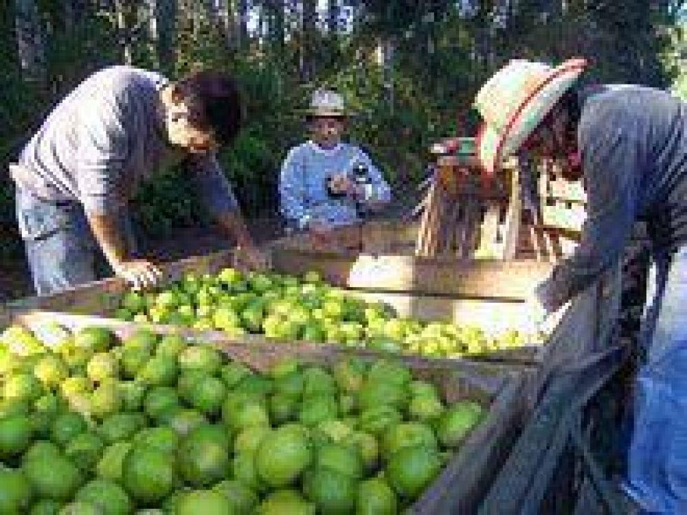 Energía: citricultores avanzan en el pedido para afrontar el costo.