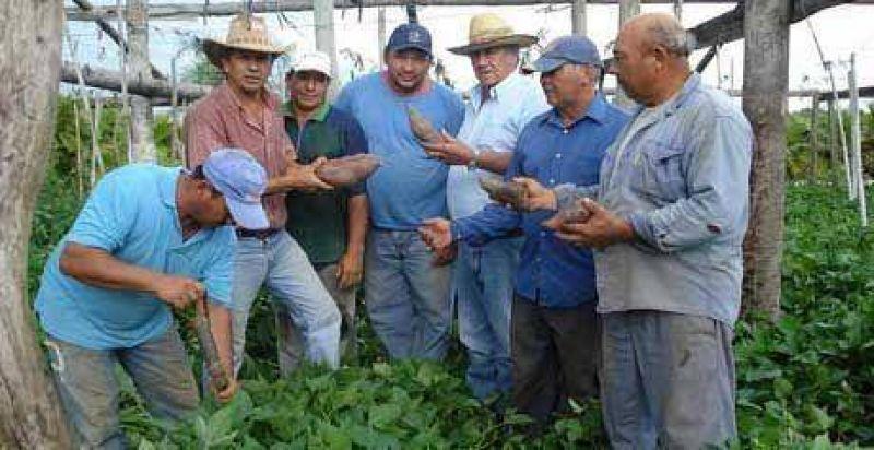 Productores quieren ampliar cultivo