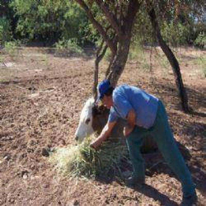 Por la sequía, salen a censar a los productores afectados