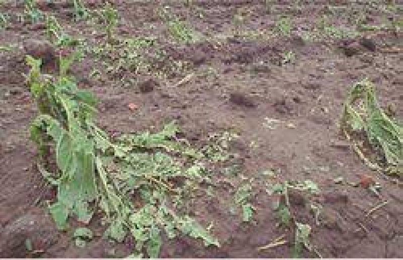 Piden la emergencia agropecuaria en Salta