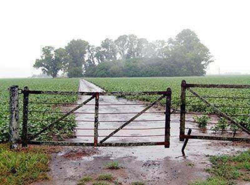 Las últimas precipitaciones no alcanzaron para revertir el estado de los cultivos.