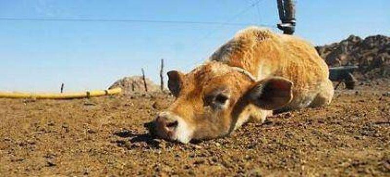 La Provincia explica las acciones gestionadas para paliar los efectos de la sequía