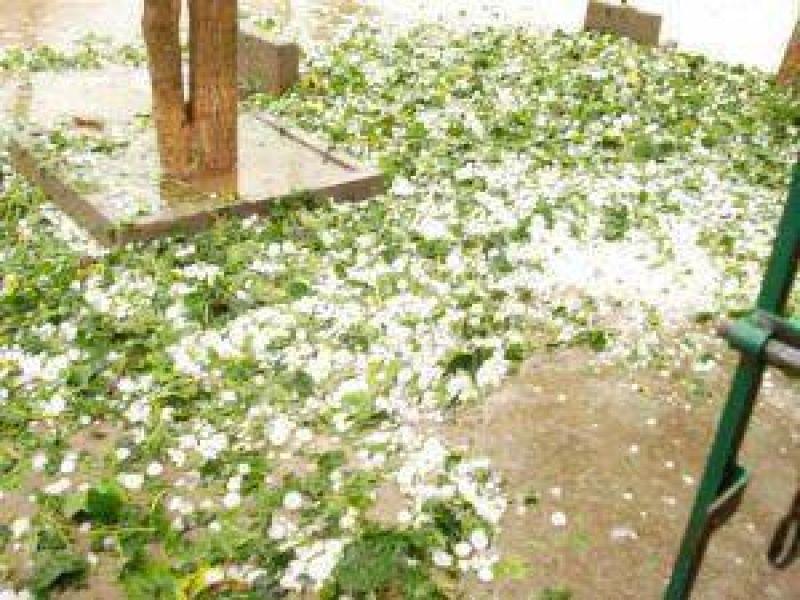 Cuantiosos daños por el granizo a la producción y a un centenar de viviendas en la zona de Pinedo.