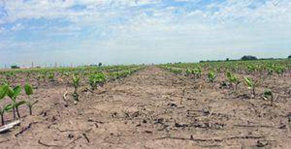 Tras el decreto provincial se analizará la situación de cada productor del distrito.