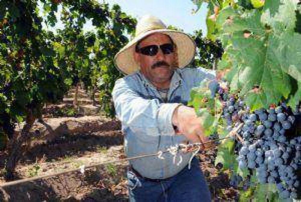 Uva: menos cosecha y bajarían cupos de mosto