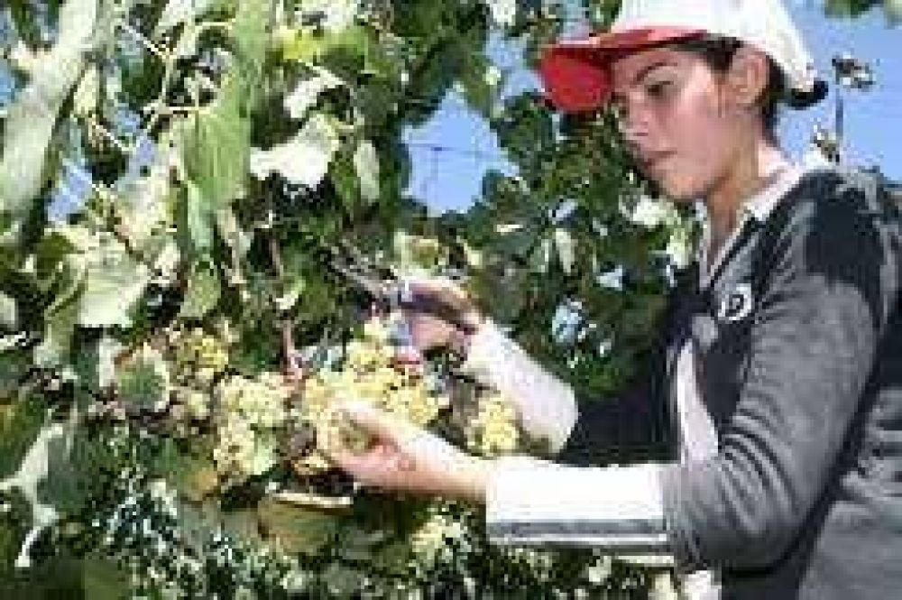 Todavía no hay acuerdo por el cupo del mosto y por el precio de la uva