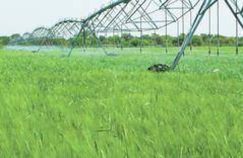 Mientras la sequía hace estragos, sólo se riega el 5% del área cultivable del país