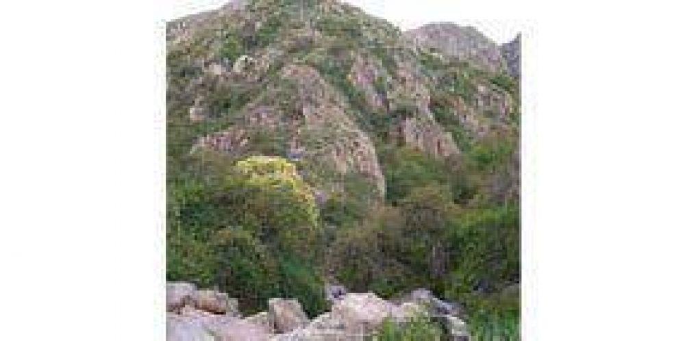 Cortaderas: un paraje natural para descansar