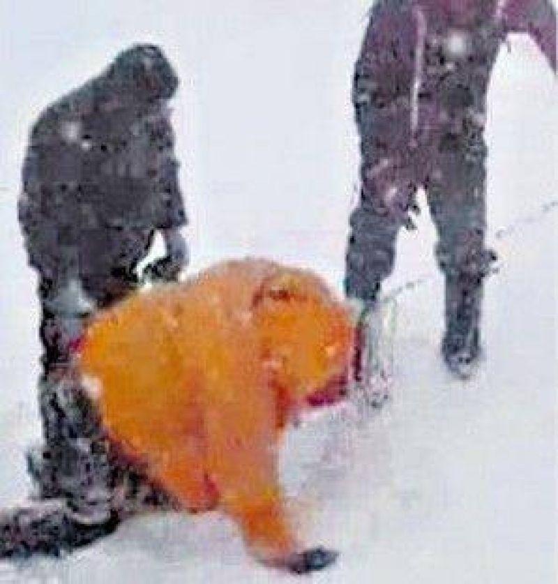 Pol�mica sobre el rescate de un gu�a en el Aconcagua