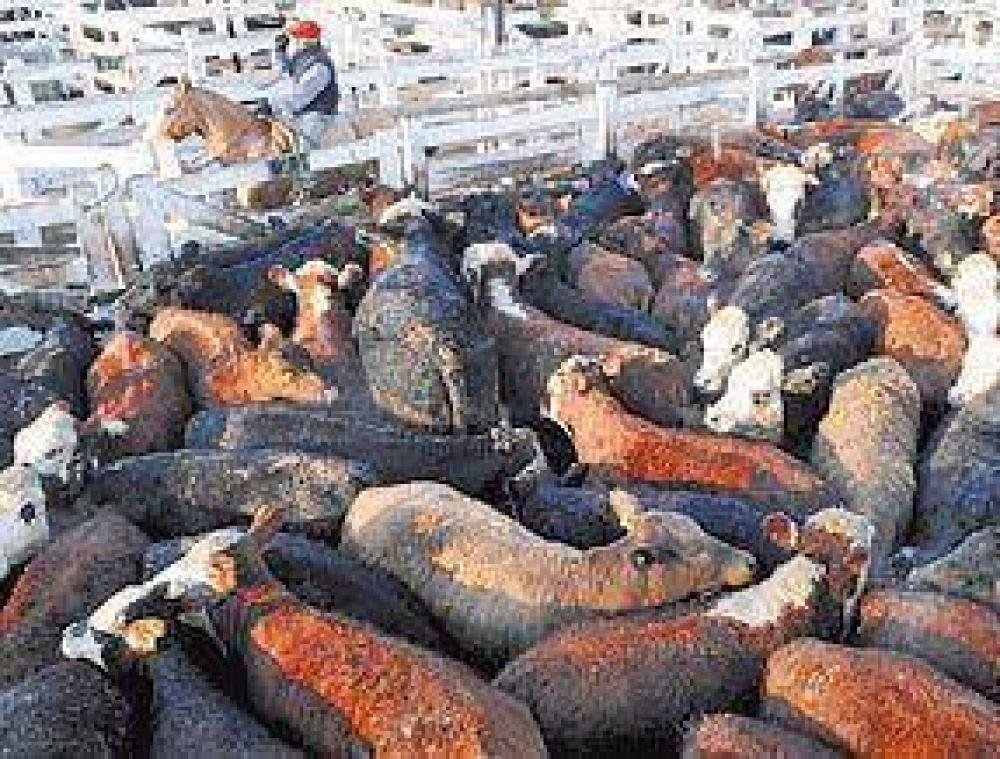 Por las lluvias, ahora sube la carne en Liniers