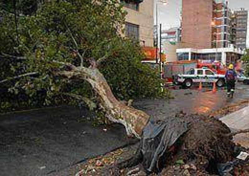 La tormenta dej� destrozos y �rboles ca�dos en el Conurbano