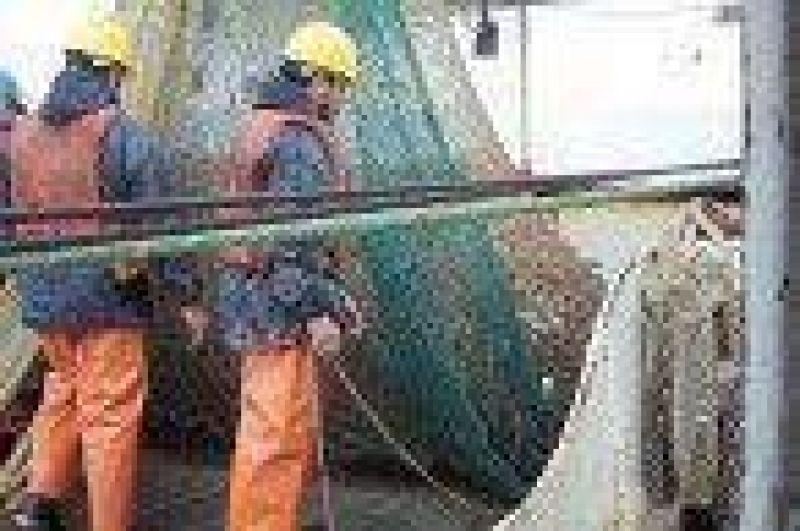 Se realiza prospección comercial de langostino en aguas de Chubut.
