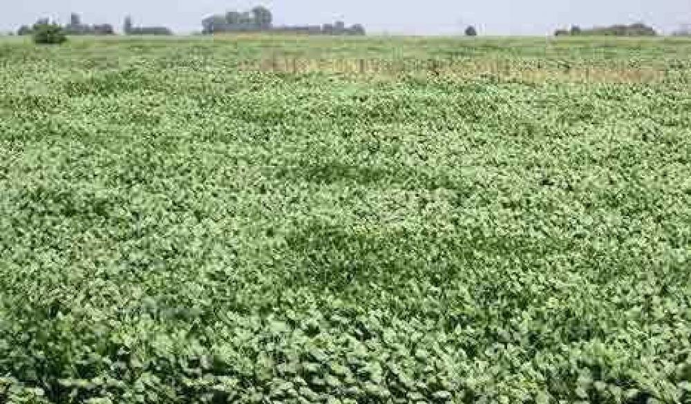 Sin control, el Ejército Argentino cultiva soja en Campo de Mayo