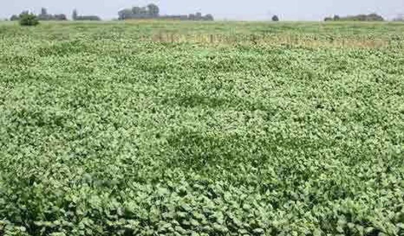 Sin control, el Ej�rcito Argentino cultiva soja en Campo de Mayo