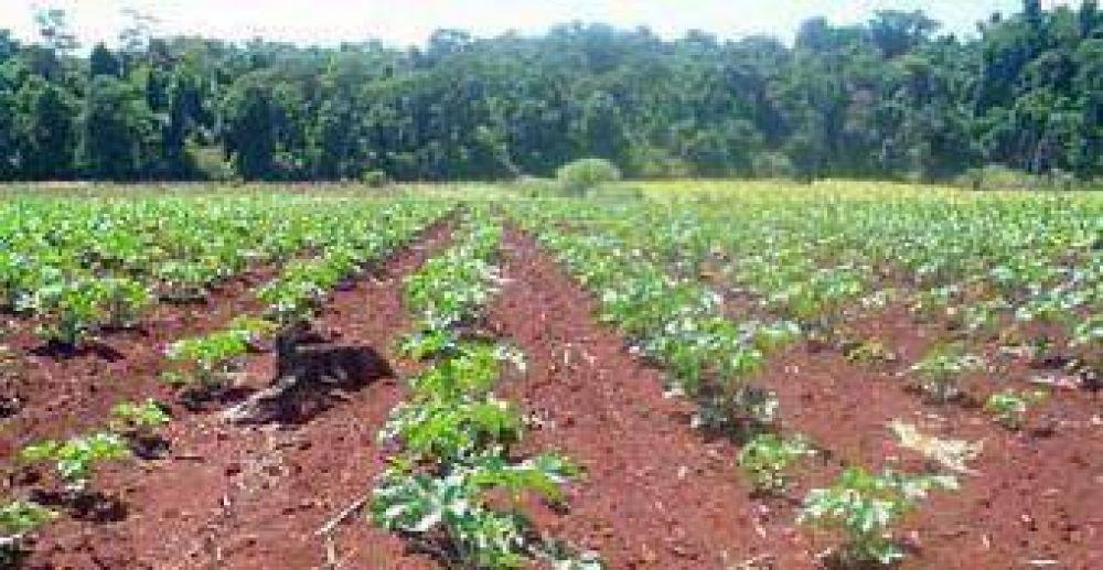 Buscan convertir a la provincia en la primera productora de tártago.