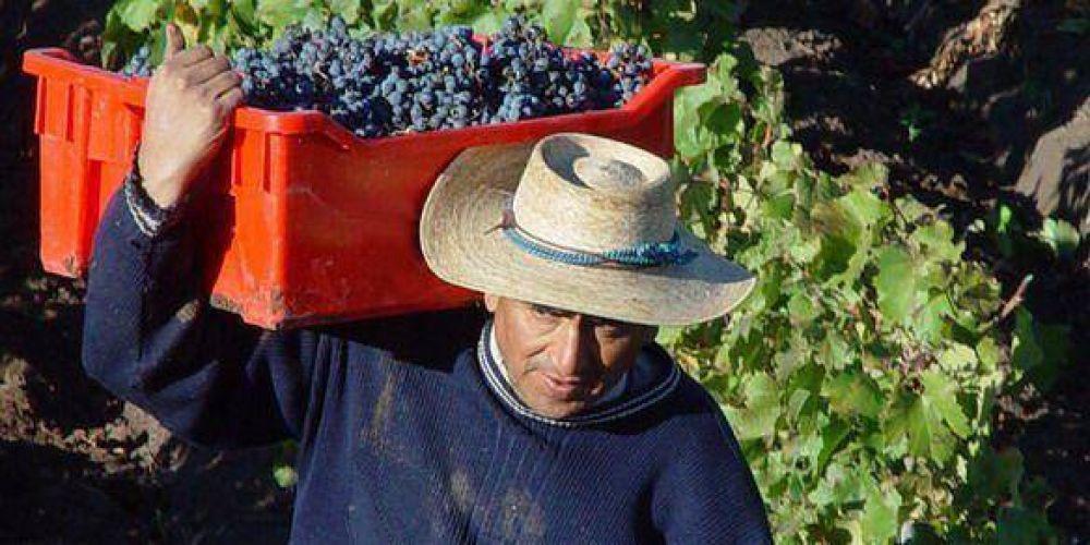 El Senado propuso que se pague 0,70 centavos por kilo de uva a los productores