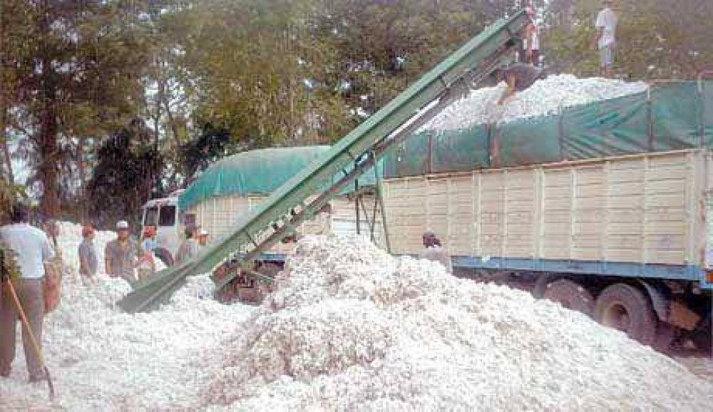 Preocupación de productores del interior por regular cosecha y falta de precios oficiales