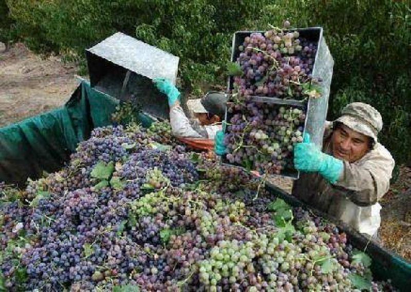 Se demorará la definición del porcentaje de uva para mosto