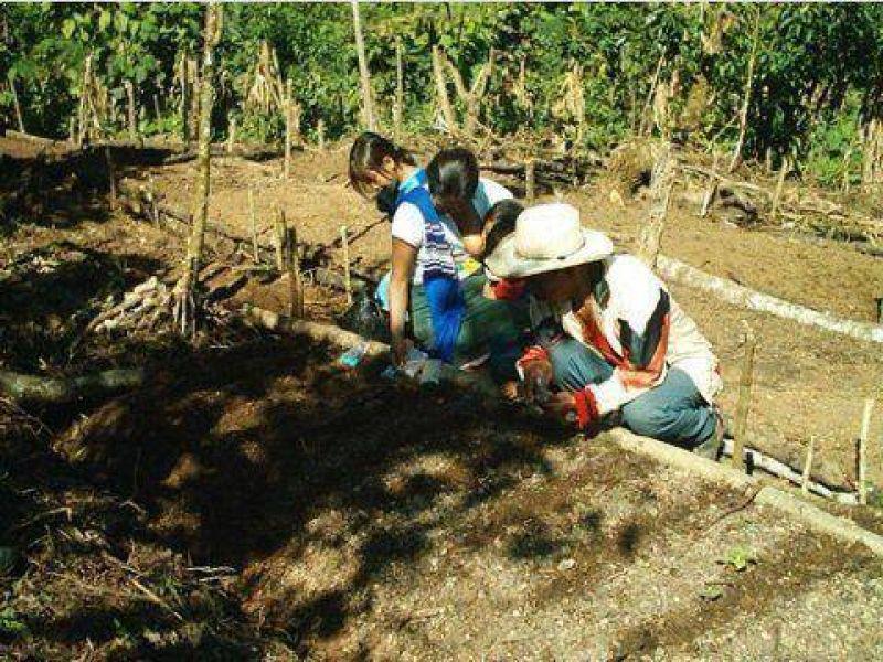 La participación de la mujer en las transformaciones del agro en las últimas décadas.
