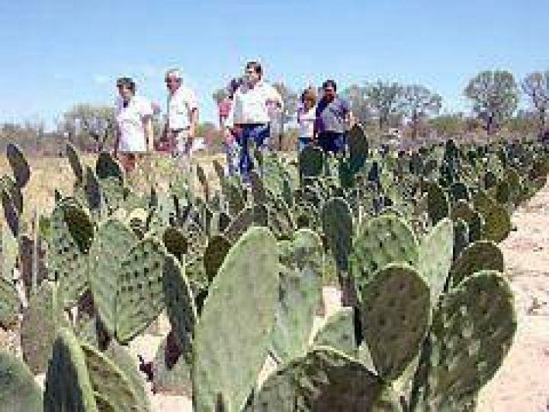 La Secretaría de Tierras adjudicó predio de 29 hectáreas para la producción