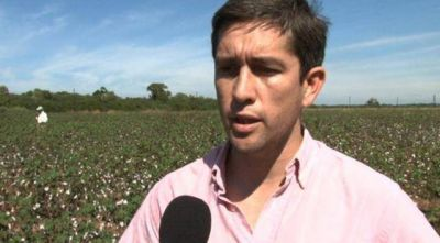 Alertan que no hay que olvidarse del picudo frente a la nueva campaña algodonera