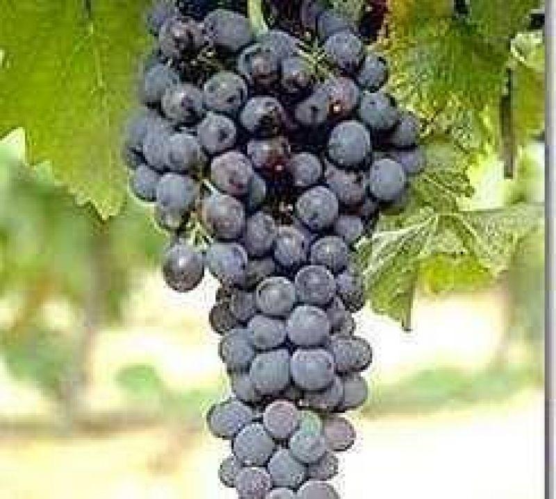 El vino argentino-chileno se atrasa por problemas legales