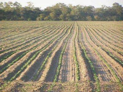 Proyectan una gran campaña girasolera: 40 mil hectáreas en el departamento Comandante Fernández