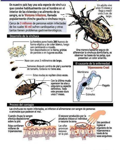 Un corte al mal de Chagas