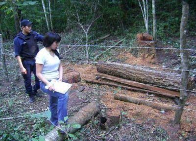 Las provincias forestales deciden ordenar la comercialización y terminar con las guías truchas