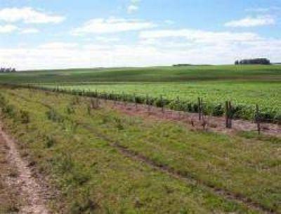 Santa Fe: el kirchnerismo insiste en subirle los impuestos al campo